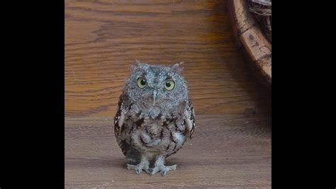 Owl as a Spirit Guide--What it Means When You Are Suddenly