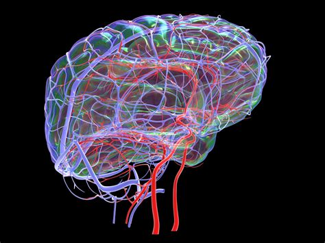 The Importance of Cerebral Blood Flow in Late-Life