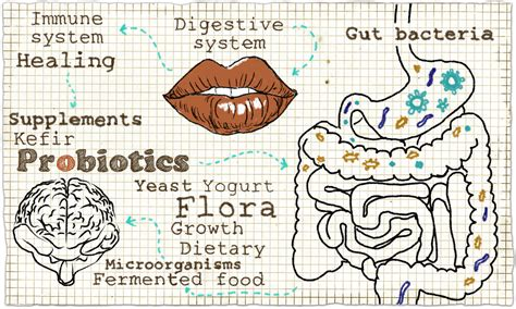 Why Your Digestive System can Fix Your Fatigue – Scott