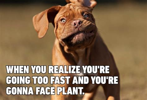 15 Hilarious Dog Memes You'll Laugh at Every Time   Reader