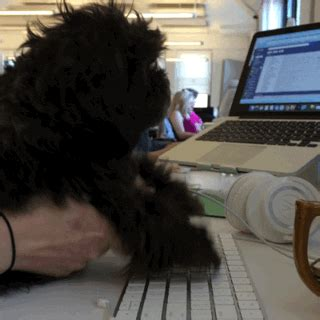Dog Typing GIFs - Find & Share on GIPHY
