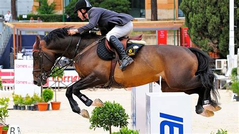 Top 5 Best Jumping Horse Breeds in the World - HorseTv Live