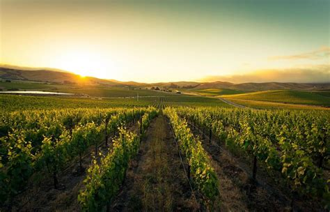The most famous wineries in Napa Valley, California, to visit