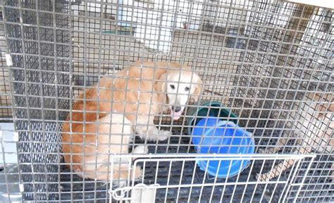 New puppy mill bill is a step in the right direction but