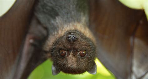 15 Bat Facts That Prove They're Not Useless, Scary Pests