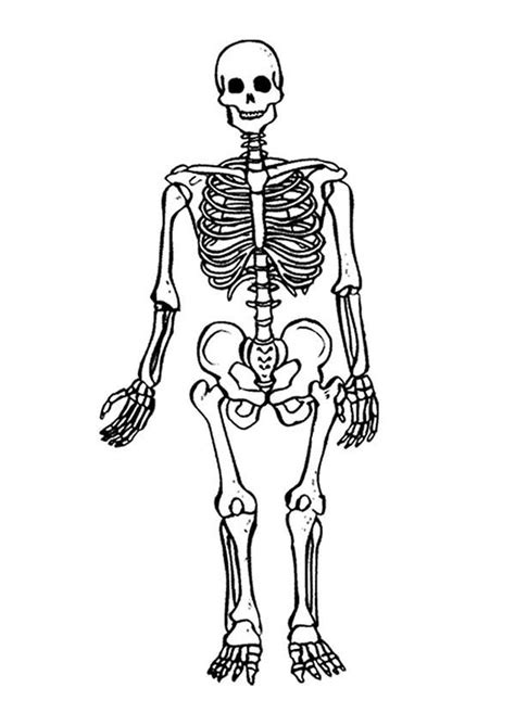 Terrifying Skeleton Coloring Page : Kids Play Color