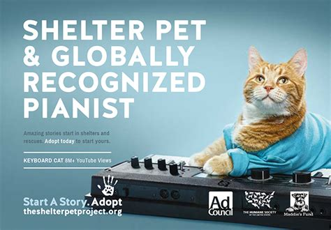 Animal Rescue Marketing Inspiration - CharityPaws