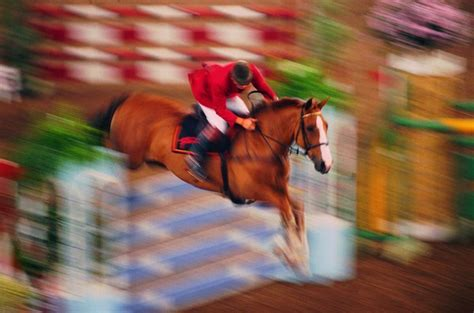 List of Olympic Horse Breeds | Animals - mom