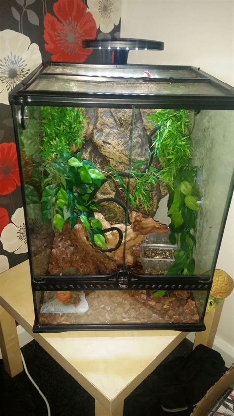 Male crested gecko and set up   Walsall, West Midlands