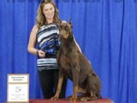 european doberman Pets and Animals for sale in Texas