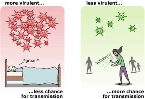 Evolution from a virus's view